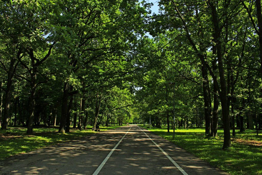Ąžuolynas / Wikipedia nuotr. / Parkai Kaune